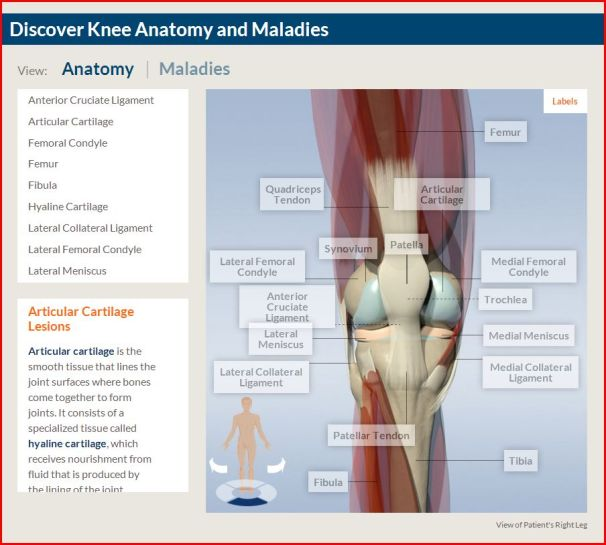 discover knee